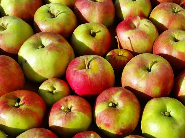 Edelbraende-Taucha-Apfel