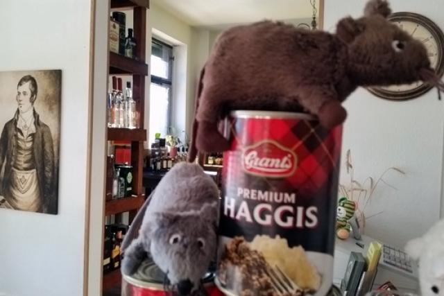 Haggis-Taucha